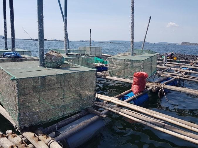 Lồng bè nuôi tôm hùm trên Vịnh Xuân Đài, Phú Yên